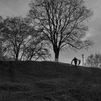 Когда деревья были большими :: Татьяна Копосова