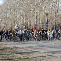 Северодвинск. Велопарад. Голова колонны из 1500 велосипедистов :: Владимир Шибинский