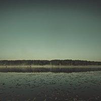 Туманные сны... :: Митя Шишкин