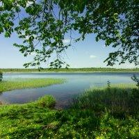 Орлинское озеро :: Наталья Ерёменко