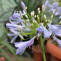весна в ботаническом саду :: Ольга Рыбакова