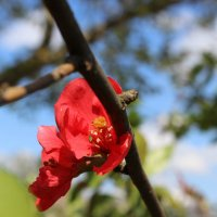 цветочка :: Ольенка Ромашка