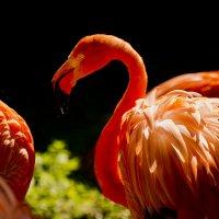 Красный- значит красивый :: MVMarina