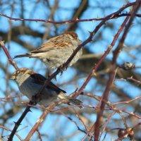 Птички :: Катюша Лебедева