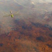 Полет над водой :: Валерий Талашов