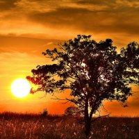 одинокую яблоню в поле,солнце нежно своим теплом согревало :: Алексей -