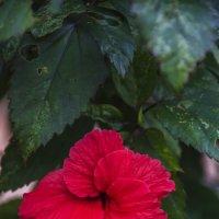 цветение деревьев :: Наталья Алексеева
