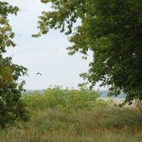 Одинокая птица :: Николай Варламов