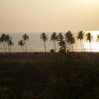 Индия,Гоа :: Nikolai Miheeff