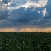 дождь на горизонте :: Илья Костин