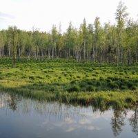 светлое болотистое... :: sv.kaschuk
