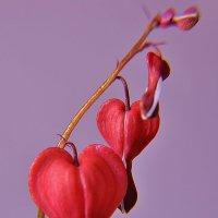 от сердца и почек  дарю вам цветочек :: Nelly G