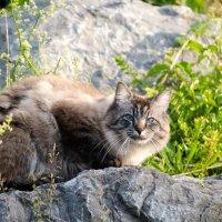 соседский кот :: Viktor Schwindt