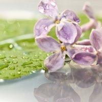 Цветы сирени и отражение :: Валерий Бочкарев
