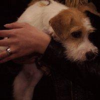 На выставке собак. :: Алексей Хаустов