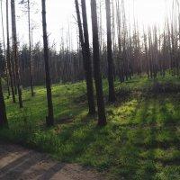 лес :: Кристина Плавская