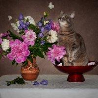 Кися и цветы 3 :: kram