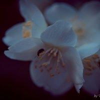 Вечерний цвет :: Дмитрий Тарарин