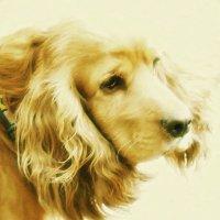 Боже, помоги мне быть таким человеком, каким считает меня моя собака... :: Наталья Костенко