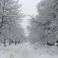 Бульвар зимой :: Александр