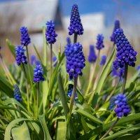 цветочки2 :: Юлия Нуркаева