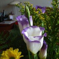 Цветы эустома :: Vladimir Dunye