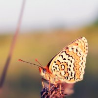 Бабочка :: Татьяна Дерягина