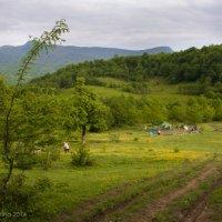 Красавица Абхазия :: Ирина Барышникова