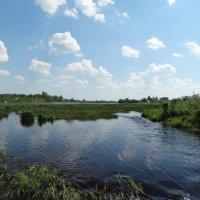 протоки реки Луга :: Михаил Жуковский