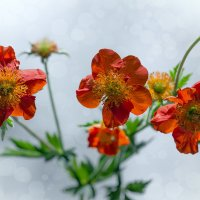 Цветики на белом :: Светлана Л.