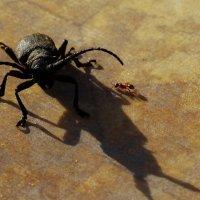 ...я инвалид,ножка болит. Солнце скроется, муравейник закроется...помоги мне! :: Владимир Гилясев