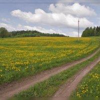 весна :: Сергей Компаниец