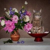Цветочно-кошачье :: kram
