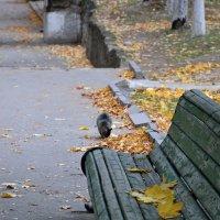Осень в парке :: Виталий Павлов