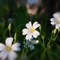 Лесные цветы :: Александр Лебедев
