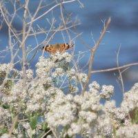 Бабочка :: Лэл Коваль