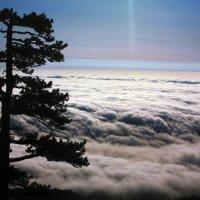 Выше облаков :: Александр Шевченко