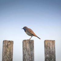 птичка :: Джони Ноксвил