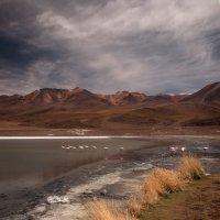 Озеро и фламинго :: сергей агаев