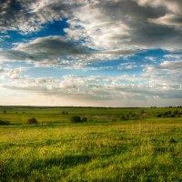 Трава и небо :: Алексей Трофимов