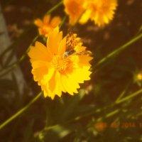 Цветочек :: Лика Кулиш