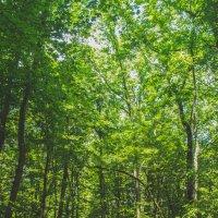 тропинка в лес :: Olga Darganchik