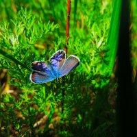бабочка 2 :: Денис Гладких