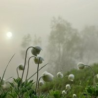 Утренний туман :: Владимир Зыбин