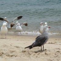Море и чайки :: Geghanush A