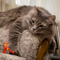 Рабочий и кот :: Дамир Фото73