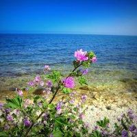 весна тянется к морю :: Zinaida Belaniuk
