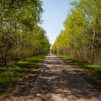Дорога через берёзовую рощу. :: Николай Симусёв