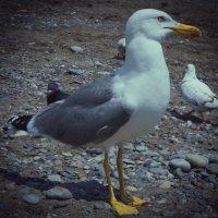 Гордая птица. :: LENUR Djalalov