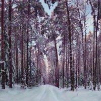 Зимний лес :: Александр Белышев